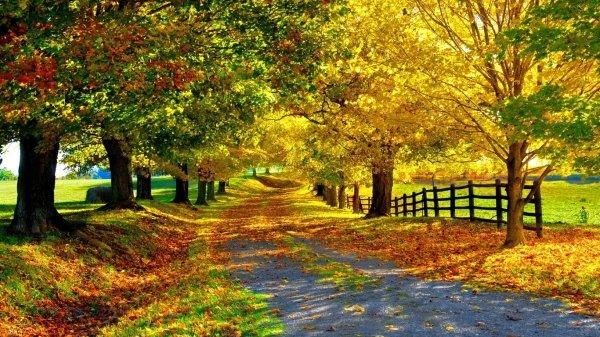 fogyjon ősszel)